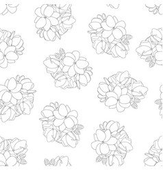 arabian jasmine outline seamless white background vector image
