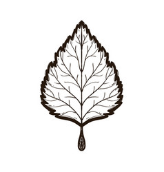 Autumn linden leaf coloring book for adults vector