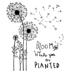 hand drawn dandelion flowers with hand lettering vector image