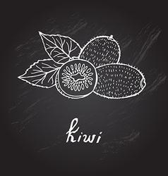 Hand drawn kiwi vector