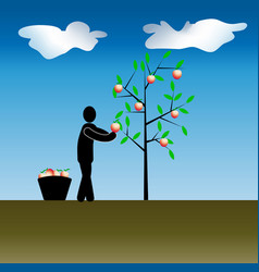 work in the garden harvesting of fruit trees vector image