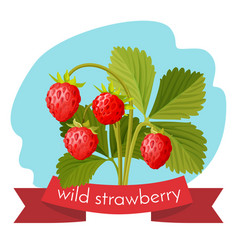 wild strawberry with green leaves isolated on vector image