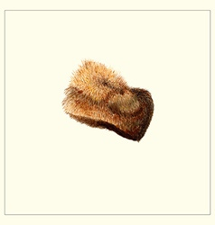 Fur Hat vector image