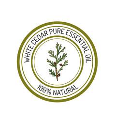 Essential oil label aromatic plant vector