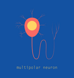 Structure of a motor neuron vector