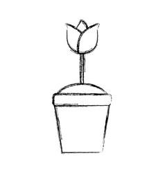 beautiful flower in pot vector image