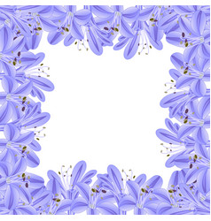 blue purple agapanthus border vector image