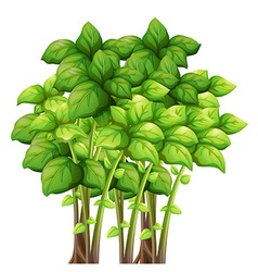 Bunch of green leaves vector