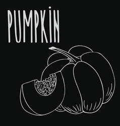 Chalkboard ripe squash or pumpkin vector