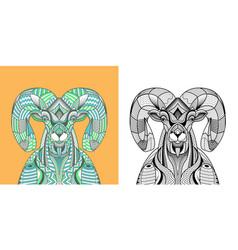 coloring book big horn sheep head vector image