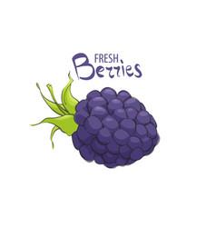 fresh ripe blackberry vector image