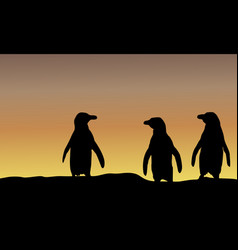 silhouette of penguin at sunset scenery vector image