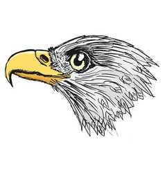 head of bald eagle vector image