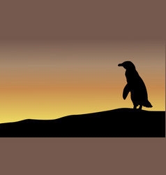 beauty landscape with penguin silhouettes vector image