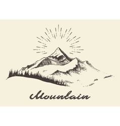 Fir forest mountain drawn vector