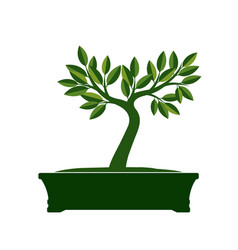 green bonsai tree vector image