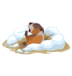 Groundhog day marmot climbed out of hole and vector
