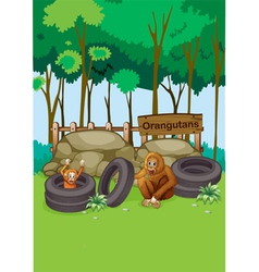 Orangutans at the zoo vector
