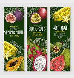 Banners set of exotic tropical fresh fruits vector