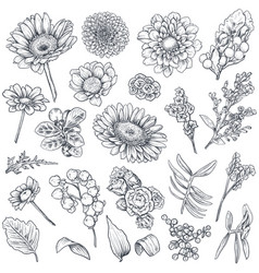 collection hand drawn flowers and plants vector image