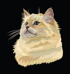 Colorful cat 10 vector