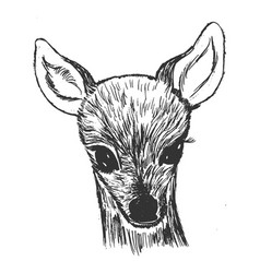 little roe deer cub vector image
