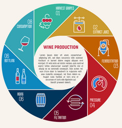 Thin line infographic wine fermentation vector