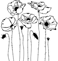 poppies silhouette on white background vector image