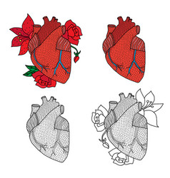 human heart isolated on vector image