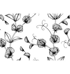 Sweet peas flower and leaf hand drawn botanical vector