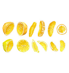 fruit set with lemon and orange in halves and vector image