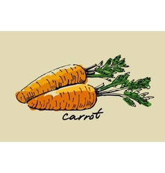 hand drawn carrot vector image