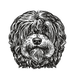 Hand drawn portrait lapdog dog pet animal vector