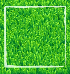 Realistic green grass background vector image vector image
