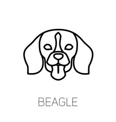 Beagle tongue out dog breed linear face icon vector
