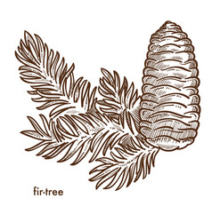 Firtree branch and cone composition plant vector
