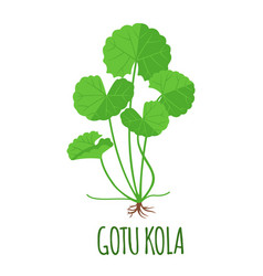 gotu kola icon in flat style isolated on white vector image