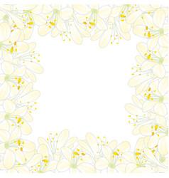 snow white agapanthus border vector image