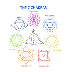 the seven chakras of the human body with their nam vector image