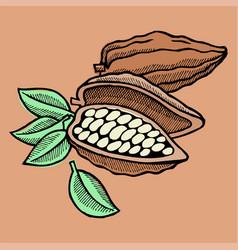 Cocoa bean hand drawn sketch doodle food vector
