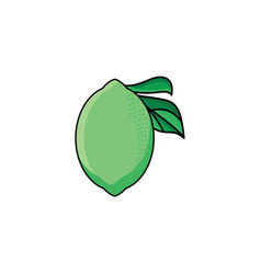Flat sketch style green fresh ripe lime vector