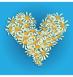 Heart flowers camomile vector