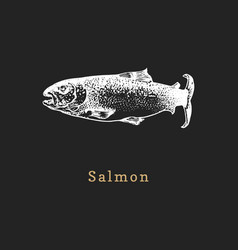 salmon on black background fish vector image