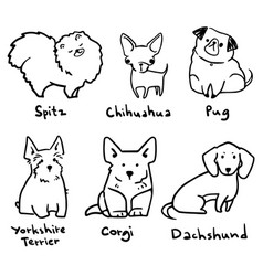 sketch six breeds cute small dogs lineart vector image