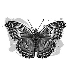 tropical butterfly monochrome hand-drawn vector image