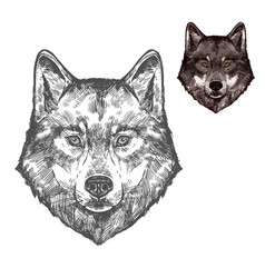 Wolf muzzle isolated sketch animal vector