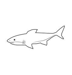 shark marine wild life nature animal vector image vector image