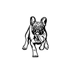 french bulldog dog - isolated vector image