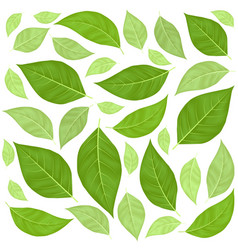 green leaves pattern background vector image vector image