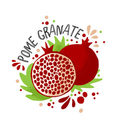 Hand draw colored pomegranate vector